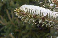 Os derretimentos da neve Imagem de Stock