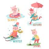 Os desenhos animados, porcos engraçados com atividade sazonal ajustaram - o verão, outono, inverno, mola Foto de Stock
