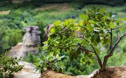 Os detalhes da cume perto de um lugar maravilhoso dos dragões jardinam, T imagem de stock