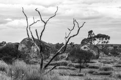 Os diabos marmoreiam a reserva da conservação de Karlu Karlu, Território do Norte, Austrália imagens de stock royalty free