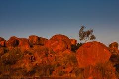 Os diabos marmoreiam a reserva da conservação no por do sol fotografia de stock