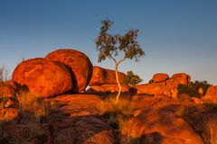 Os diabos marmoreiam a reserva da conservação no por do sol fotografia de stock royalty free