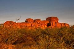Os diabos marmoreiam a reserva da conservação no por do sol fotos de stock