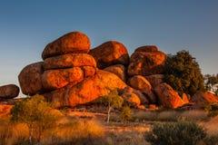 Os diabos marmoreiam a reserva da conservação no por do sol fotos de stock royalty free