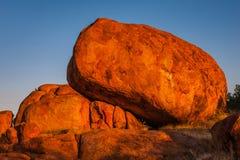 Os diabos marmoreiam a reserva da conservação no por do sol imagem de stock