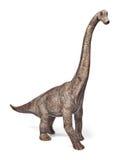 Os dinossauros do Brachiosaurus brincam isolado no fundo branco com trajeto de grampeamento imagem de stock
