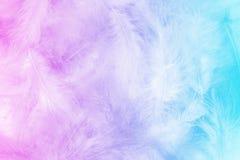 Os doces colorem o fundo com fluff do pássaro imagem de stock royalty free
