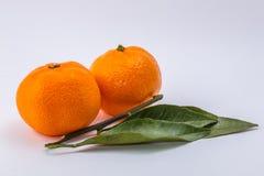 Os dois mandarino no fundo branco foto de stock