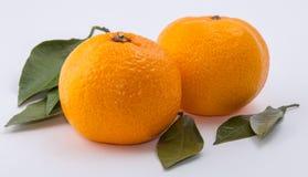 Os dois mandarino no fundo branco fotografia de stock