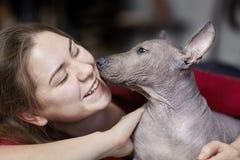 Os dois meses do cachorrinho velho da raça rara - Xoloitzcuintle, ou cão calvo mexicano, tamanho padrão, com a mulher de riso nov fotos de stock