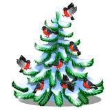 Os dom-fafe alegres sentam-se em um abeto vermelho nevado isolado no fundo branco Amostra de cartão do Natal e do ano novo Ilustração Royalty Free