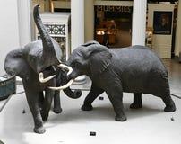 Os elefantes africanos da luta fotografia de stock royalty free