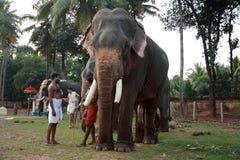 Os elefantes do templo são acompanhados por seus mahouts foto de stock royalty free