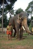 Os elefantes do templo são acompanhados por seus mahouts fotografia de stock