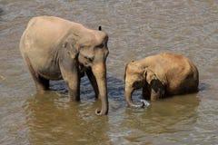 Os elefantes são de banho e de lavagem no rio Fotos de Stock Royalty Free