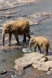 Os elefantes são de banho e de lavagem no rio Imagens de Stock Royalty Free