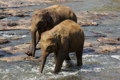 Os elefantes são de banho e de lavagem no rio Fotos de Stock