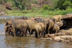 Os elefantes são de banho e de lavagem no rio Imagens de Stock