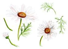 Os elementos do desenho da ilustração florescem perto acima e com dos detalhes diferentes ilustração royalty free