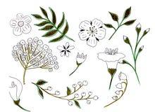Os elementos do desenho da ilustração florescem perto acima e com dos detalhes diferentes ilustração stock