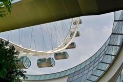 Os elementos do projeto da observação do inseto de Singapura rodam Imagem de Stock