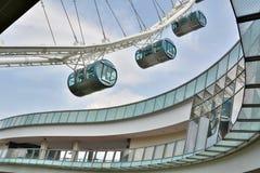 Os elementos do projeto da observação do inseto de Singapura rodam o complexo Imagens de Stock Royalty Free