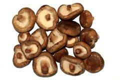 Os epodes de Lentinula dos cogumelos de shiitake Fotografia de Stock