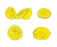 Os esboços coloridos od ajustados isolados, mão do limão do vetor tirada frutificam ilustração do vetor