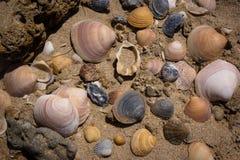 Os escudos da Andaluzia da Espanha na praia nos moluscos dos escudos da areia encalham imagem de stock