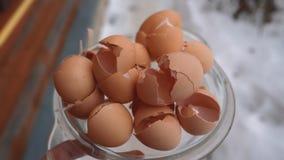 Os escudos de ovo beneficiam o adubo das cascas de ovo do solo do jardim imagem de stock