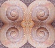Os escudos do caracol arranjaram em um quadrado imagem de stock royalty free