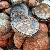 Os escudos do coco desfazem-se do coco imagem de stock royalty free
