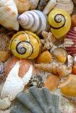 Os escudos e o caranguejo do mar agarram na praia imagens de stock royalty free