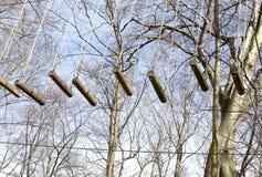 Os esportes arrastam o teste, curso de obstáculo nas madeiras, um trajeto dos logs, equipamento em árvores fotos de stock royalty free