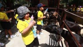 Os estudantes do jardim de infância visitam o jardim zoológico vídeos de arquivo