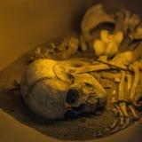 Os et squelette humains antiques de crâne Image libre de droits