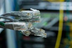 Os ethernet levantam rj45 para o conne dos ethernet da rede local do LAN Imagem de Stock