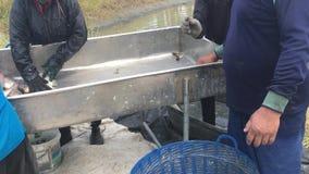 Os fazendeiros de Tail?ndia est?o colhendo peixes de sua lagoa com uma rede de pesca em Chachoengsao video estoque