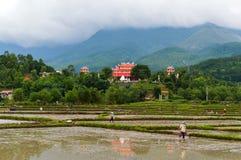 Os fazendeiros dos camponeses trabalham nos campos inundados com água nos montes Construção da arquitetura do campo e do asiático fotografia de stock royalty free