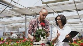 Os fazendeiros e os jardineiro felizes trabalham e examinam vasos de flores na estufa industrial ensolarada video estoque