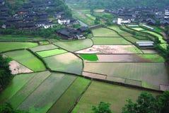 Os fazendeiros estão trabalhando no campo do arroz, China Fotos de Stock