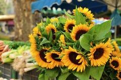 Os fazendeiros introduzem no mercado com girassóis fotografia de stock