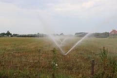 Os fazendeiros nos Países Baixos estão pulverizando a água sobre os prados durante o verão seco de 2018 quando este não for permi fotos de stock