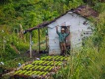 Os fazendeiros que cumprimentam Imagem de Stock Royalty Free