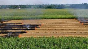 Os fazendeiros queimam inclinações de resíduos da vegetação, da fertilidade de solo assim de degradação e da degradação ambiental vídeos de arquivo