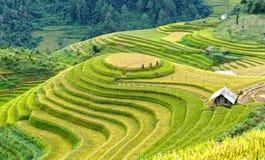 Os fazendeiros vão colheita do campo de milho da verificação Imagem de Stock Royalty Free