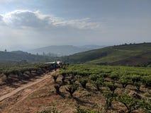 Os fazendeiros vietnamianos atravessam em casa campos do chá imagens de stock