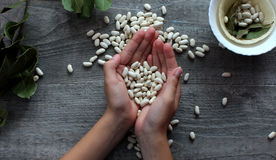 Os feijões brancos e as mãos fêmeas simbolizam comer saudável Fotografia de Stock Royalty Free