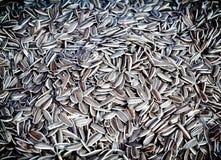 Os feijões secados de sementes de girassol são colocados Imagem de Stock Royalty Free