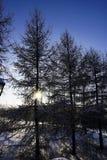 Os feixes do sol que obtém através dos ramos das árvores imagens de stock royalty free